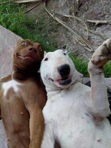 pasji selfie