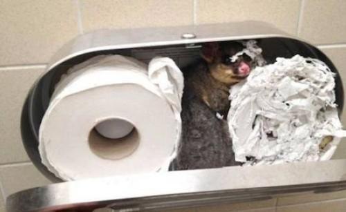 moimoi wc