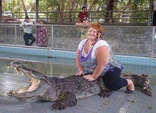 krokodilko